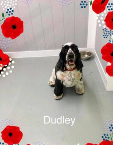 dudley2after