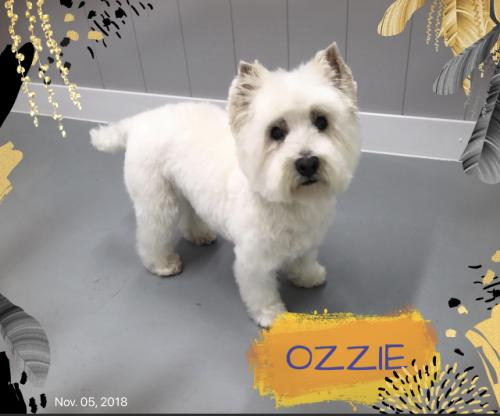 ozzieafter